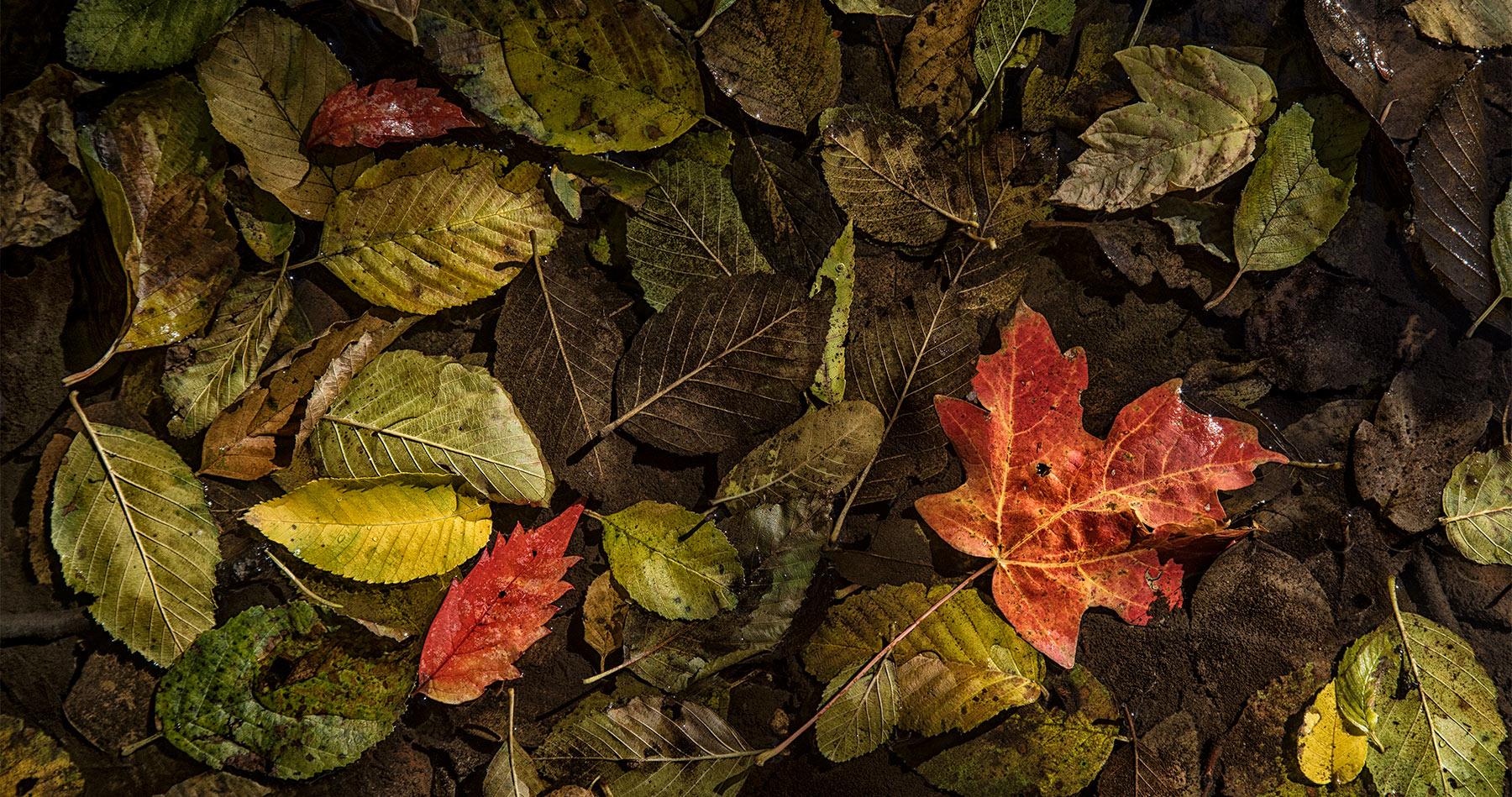 fall_color_sedona_intro