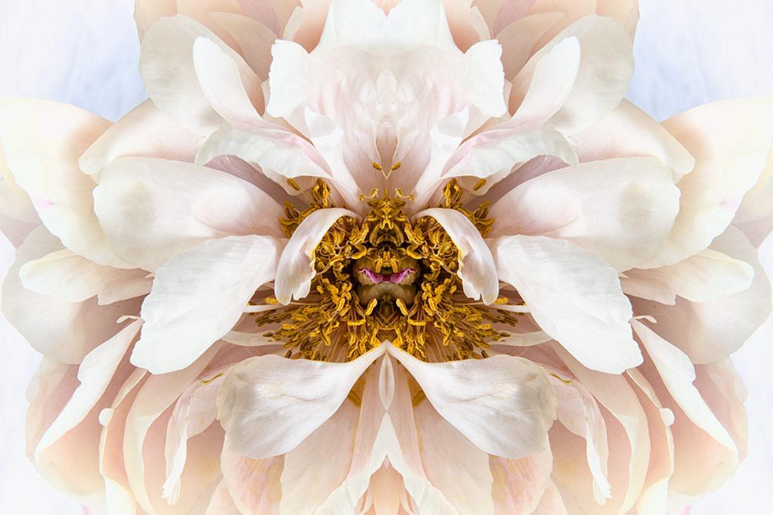 flower_power_mirrored