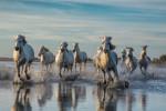 france_camargue_horses03