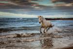 france_camargue_horses07