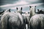 france_camargue_horses27