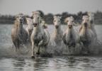 france_camargue_horses31