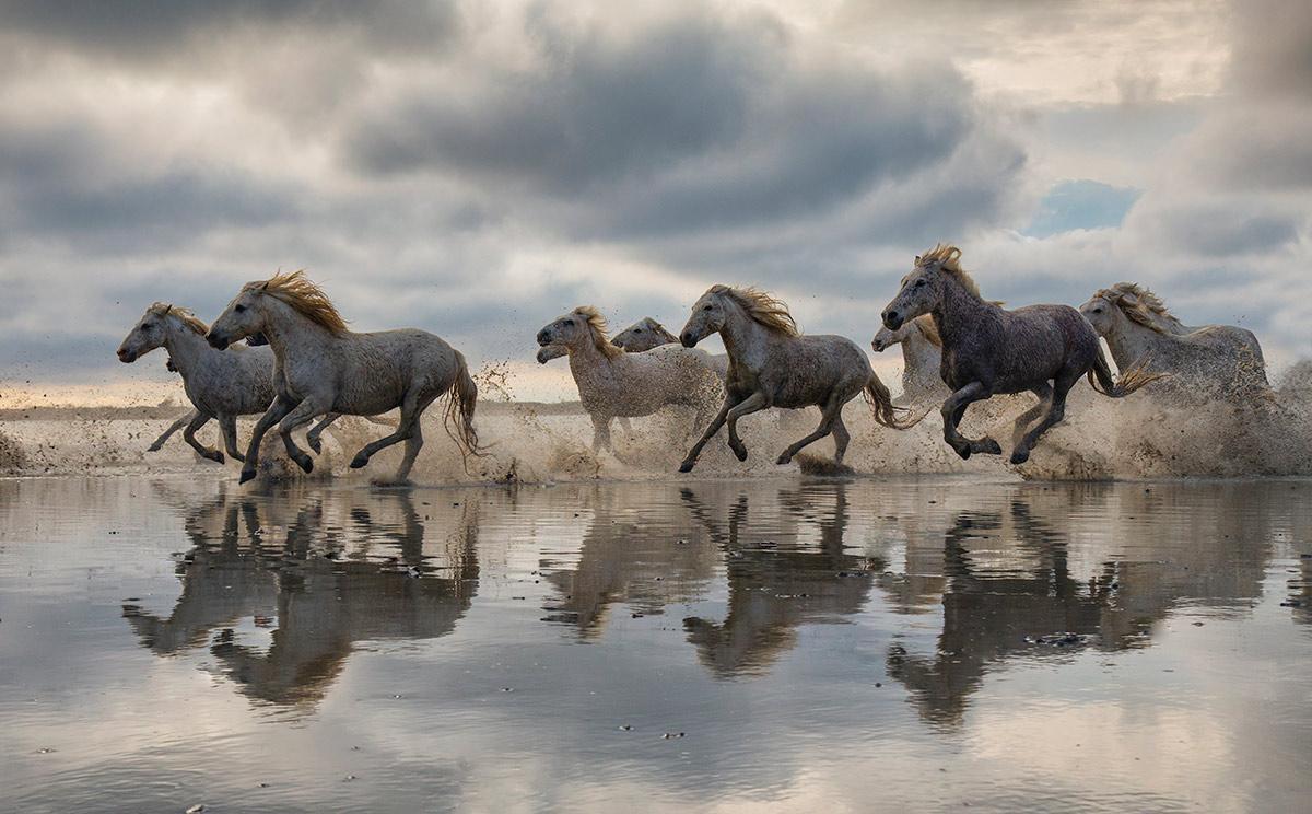 france_camargue_horses32