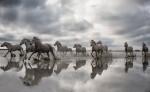 france_camargue_horses33