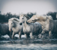 france_camargue_horses64