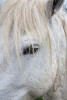 france_camargue_horses67