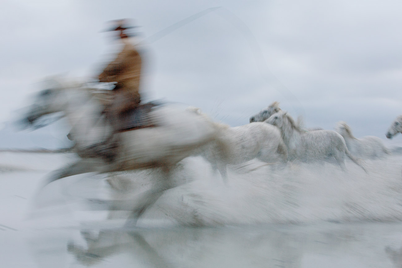 The white Camargue horses of France