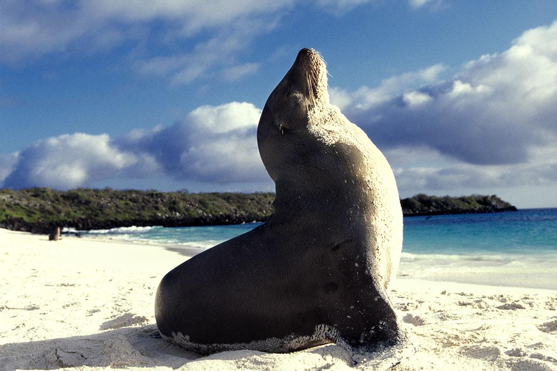 galapagos_islands001