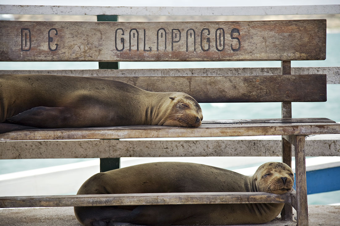 galapagos_islands002