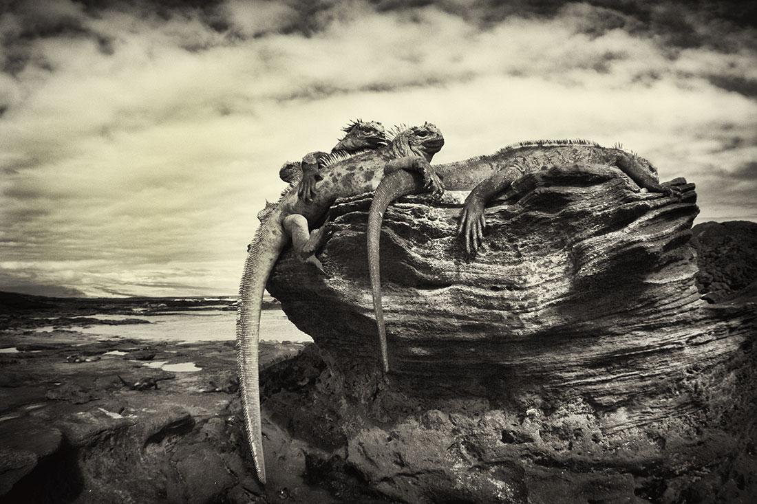 galapagos_islands005