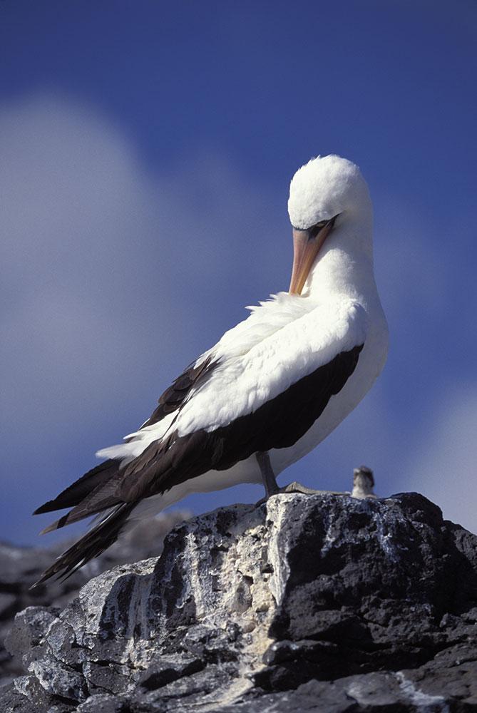 galapagos_islands012