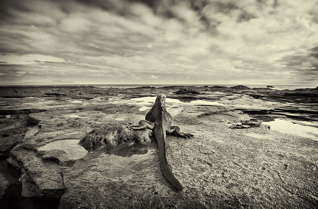 galapagos_islands017
