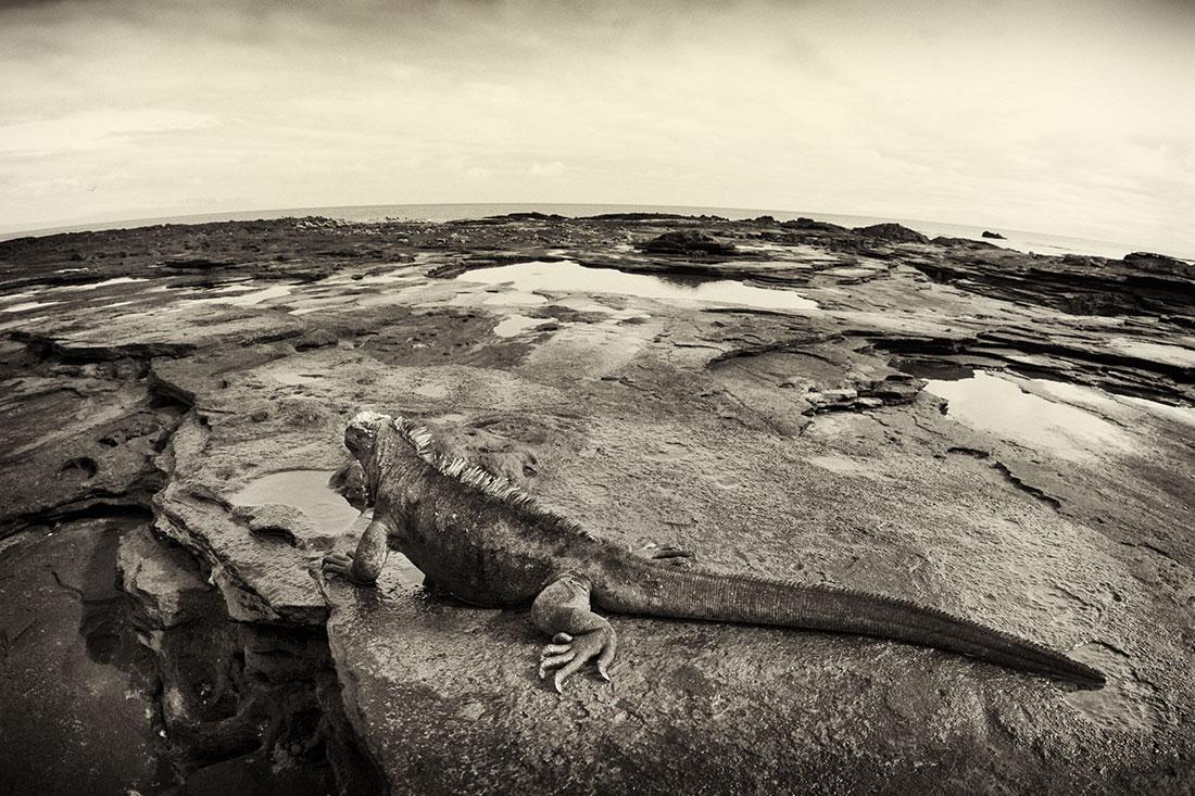 galapagos_islands018