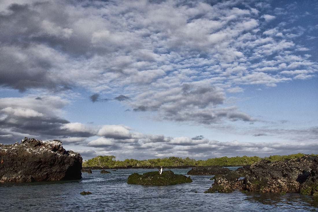 galapagos_islands037