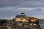 galapagos_islands038