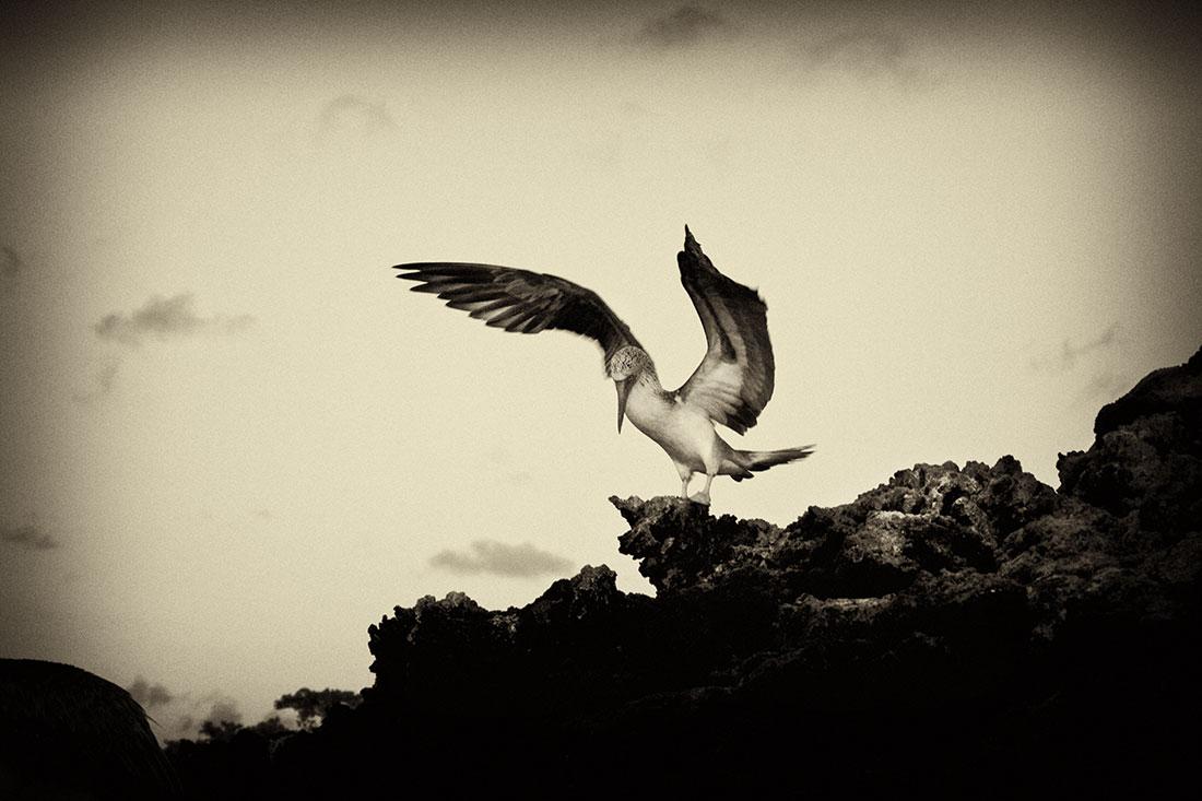 galapagos_islands048