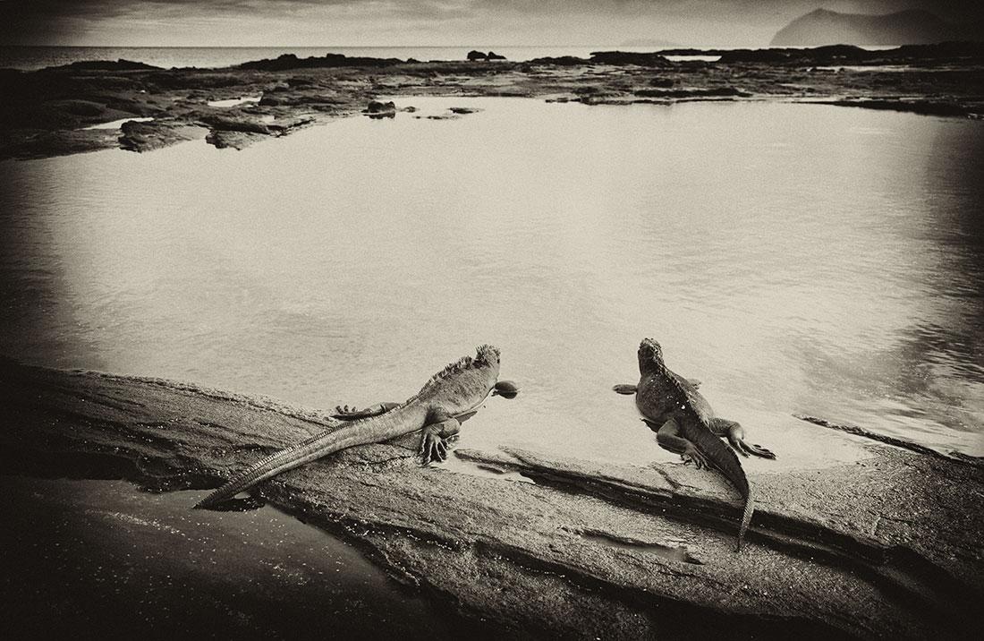galapagos_islands056