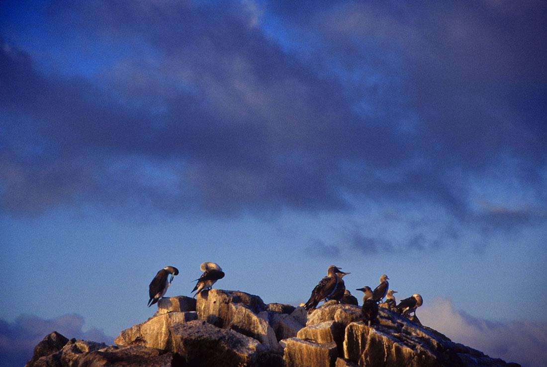 galapagos_islands060
