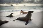 galapagos_islands067
