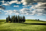 grove_of_trees_tuscany_val_dorcia