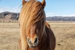 iceland_2018_workshop_horse_beauty