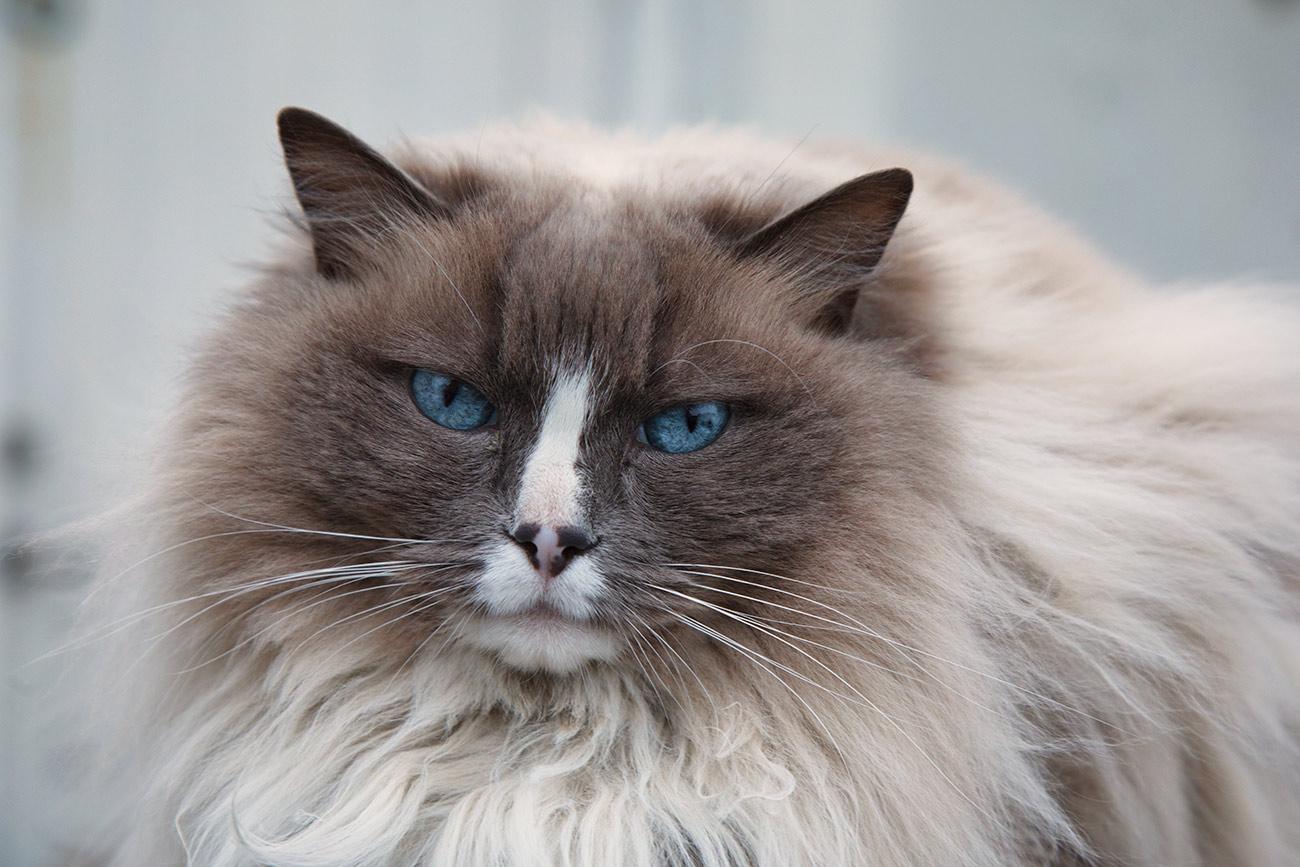 Kitty kat in Reykjavík