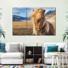 icelandic_horses_gorgeous_beauty
