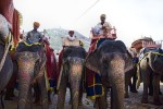 The painted elephants of Jaipur