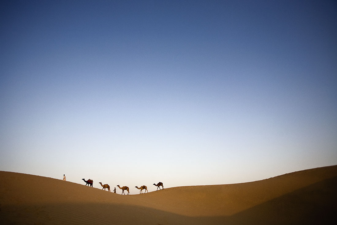 Camels and their owners at in Rajistan, India