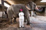 Trainer and his elephant in the city of Jaipur