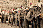 The painted elephants of Amber Fort, Jaipur
