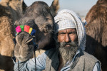 Camel traders at the Pushkar Camel Fair