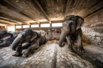 The painted elephants of Jaipur, India