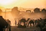 The Pushkar Camel Fair