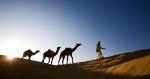 india_camels_2