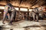 india_elephants_andrew2_01