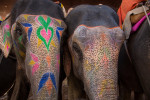 india_elephants_andrew2_06