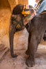 india_elephants_andrew2_08