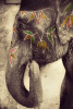 india_elephants_andrew2_09
