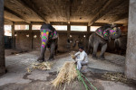 india_elephants_andrew2_17