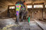 india_elephants_andrew2_19