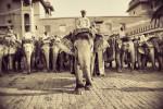 india_elephants_andrew2_20