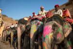 india_elephants_andrew2_21