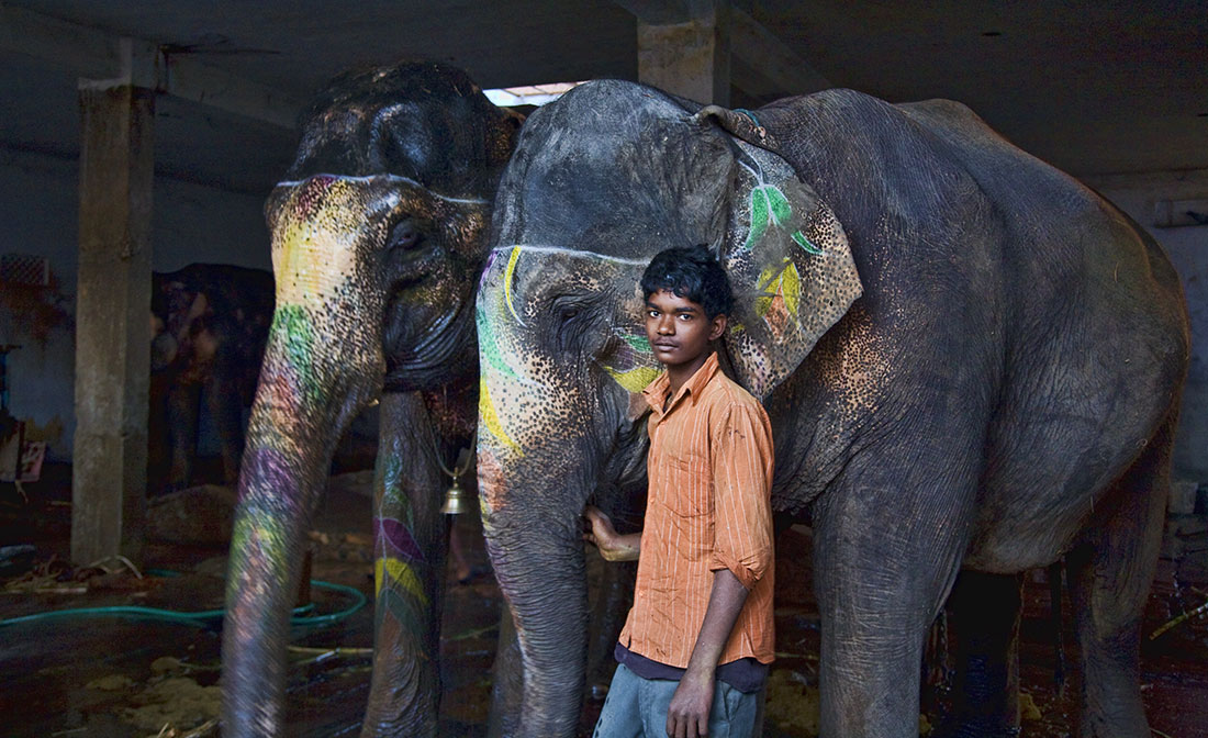 india_elephants_andrew2_25
