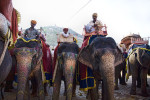 india_elephants_andrew2_28