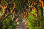 The amazing Dark Hedges in northern Ireland