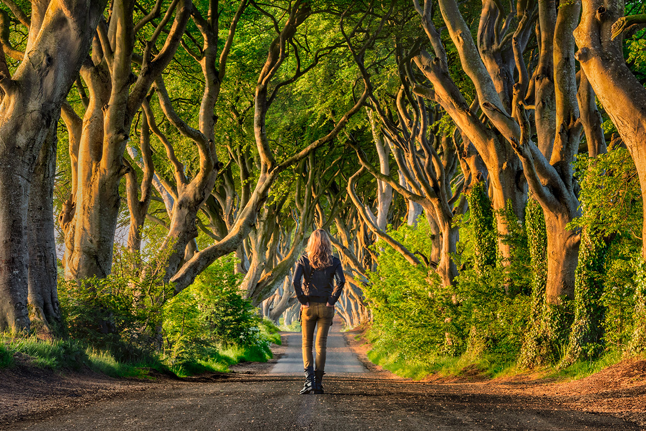 Holly in the Dark Hedges