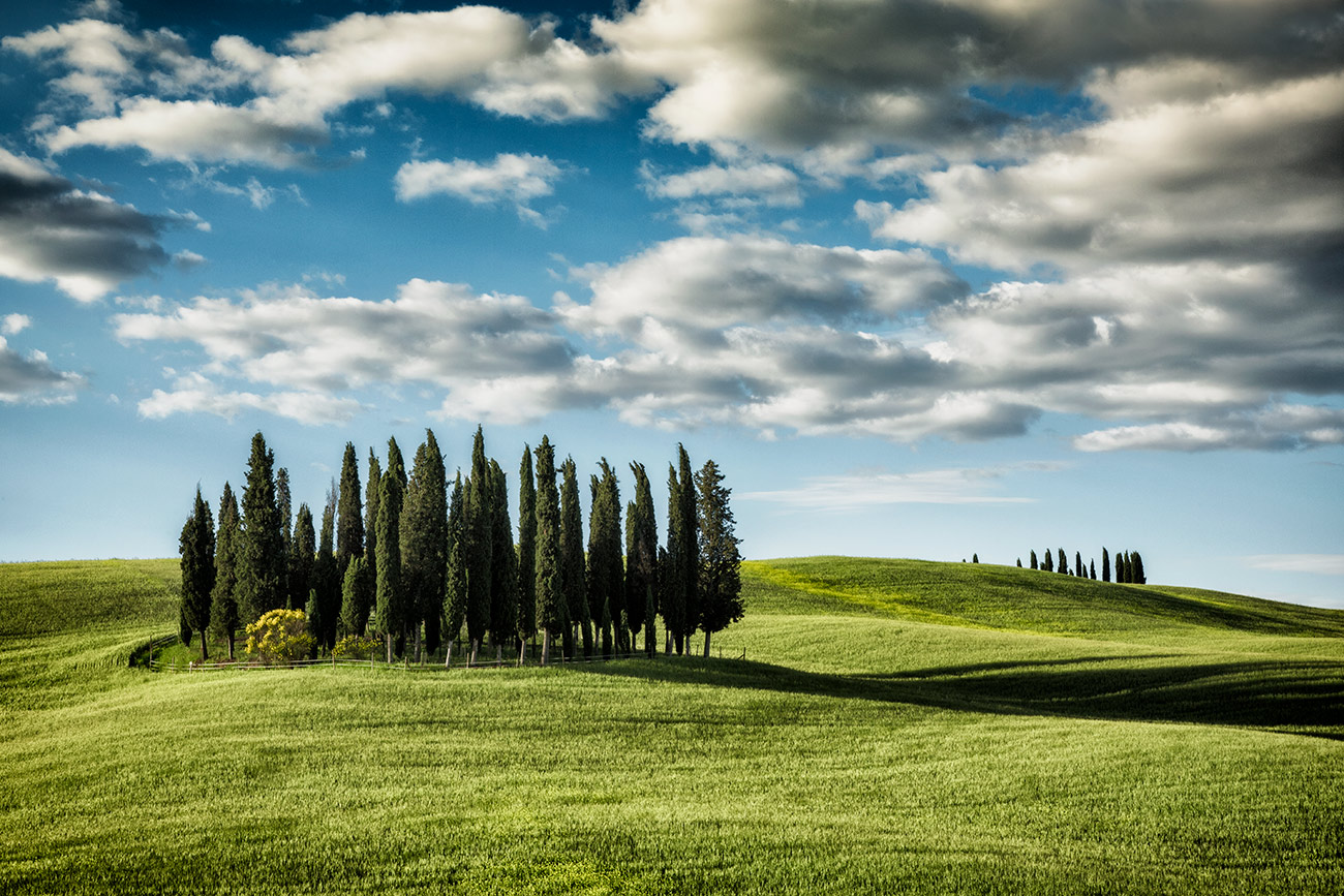 The amazing Cypress Grove in Tuscany