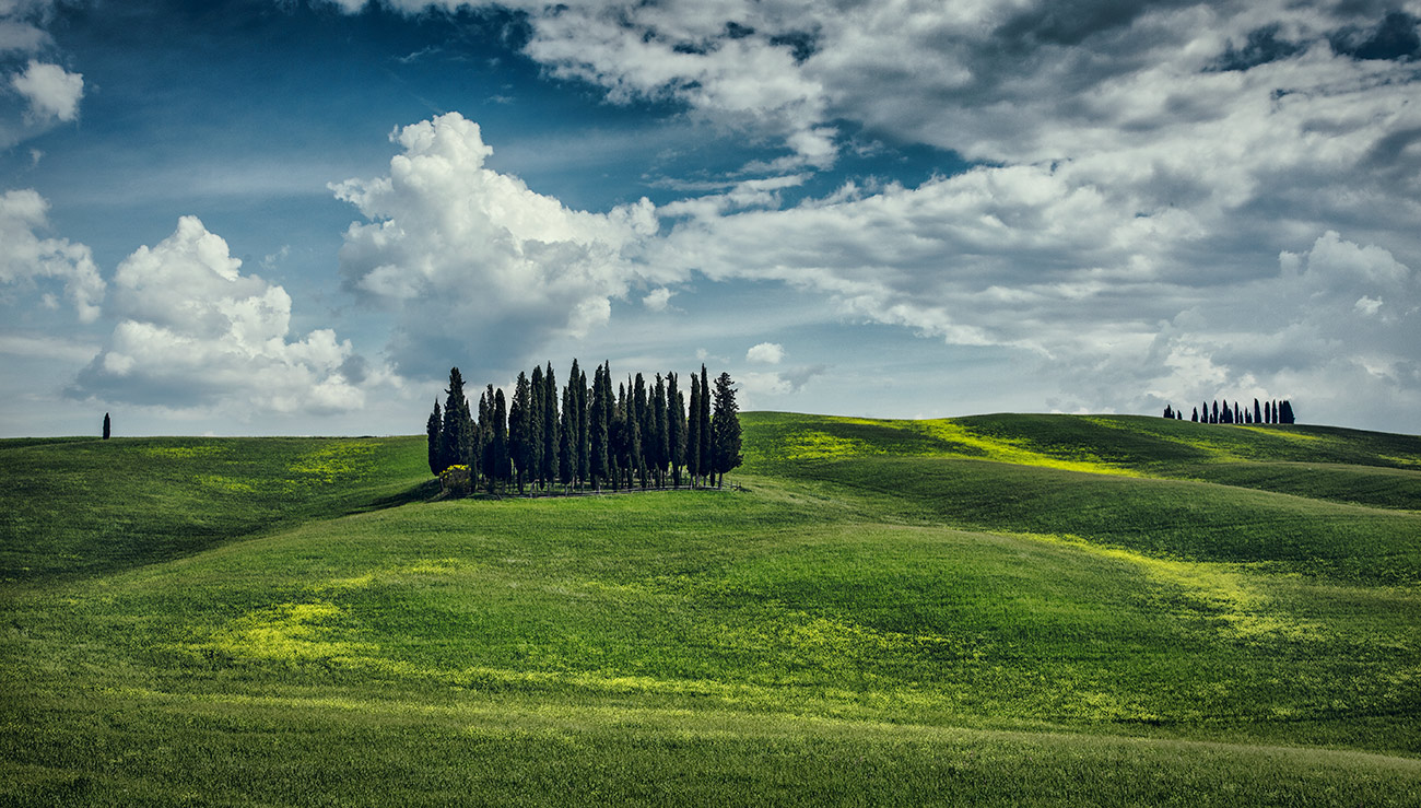 The cypress trees of Val D'orcia in Tuscany