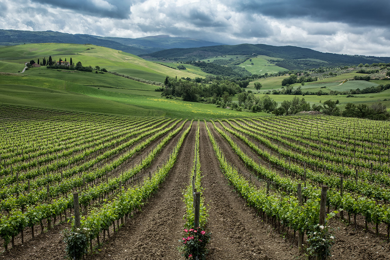 The vineyards of Tuscany